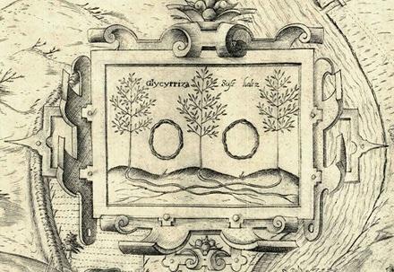 Abbildung von Süßholz auf dem Stadtplan von Petrus Zweidler aus dem Jahre 1602.